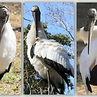 Wood Stork:  Front, Side, and Back Views by AuntDot