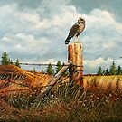 """""""Watching For Prey"""" by Frank Boudreau"""