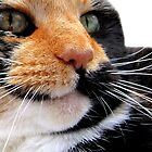 Calico Cat by Sally Green
