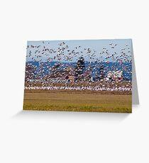 Skagit Valley Snow Geese Greeting Card