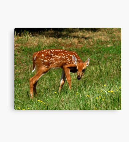 Innocence (White-tailed Deer Fawn) Canvas Print