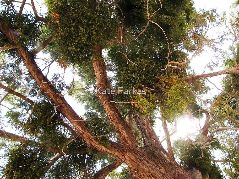 Juniper tree in Sedona by Kate Farkas