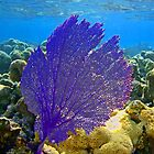 Coral fan by Leon Heyns