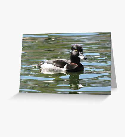 Ring-necked Duck ~ Male Greeting Card