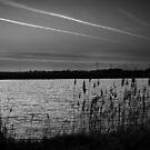 Stripes Through the Sky. by Ruth Jones