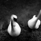 The Tale of Two Swans. by Ruth Jones