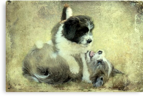"""""""& they call it Puppy Love ..."""" by Rosehaven"""