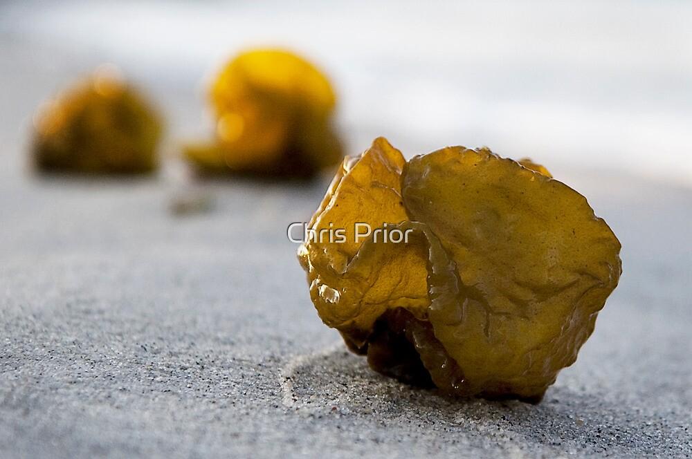Seaweed Baubles by Chris Prior