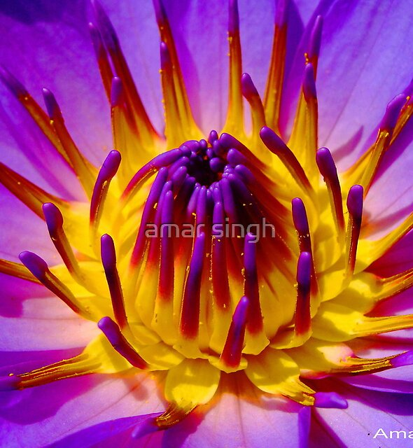 BURNING FLOWER by amar singh