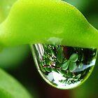 Water droplet by amar singh