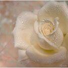 Full Bloom by SandraRos