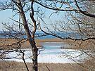 Woodneck Beach - Sippiwessitt, Cape Cod, MA by MotherNature