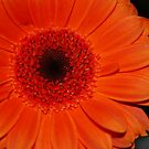 Orange Glow by Geraldine Miller