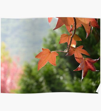 Autumn Glow III Poster