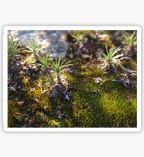 Serpentine Moss Sticker