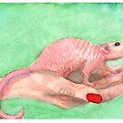Hairless Rattie by webpixie