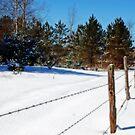 Winter's Day Walk by cherylc1