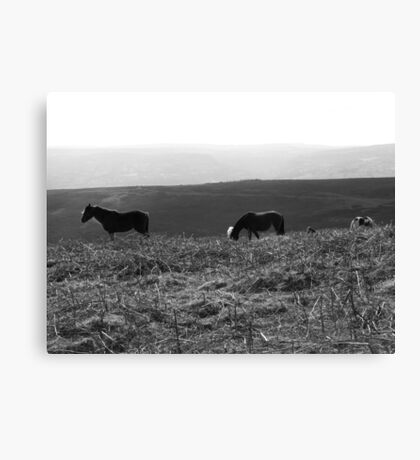 Black Mountain Ponies Canvas Print
