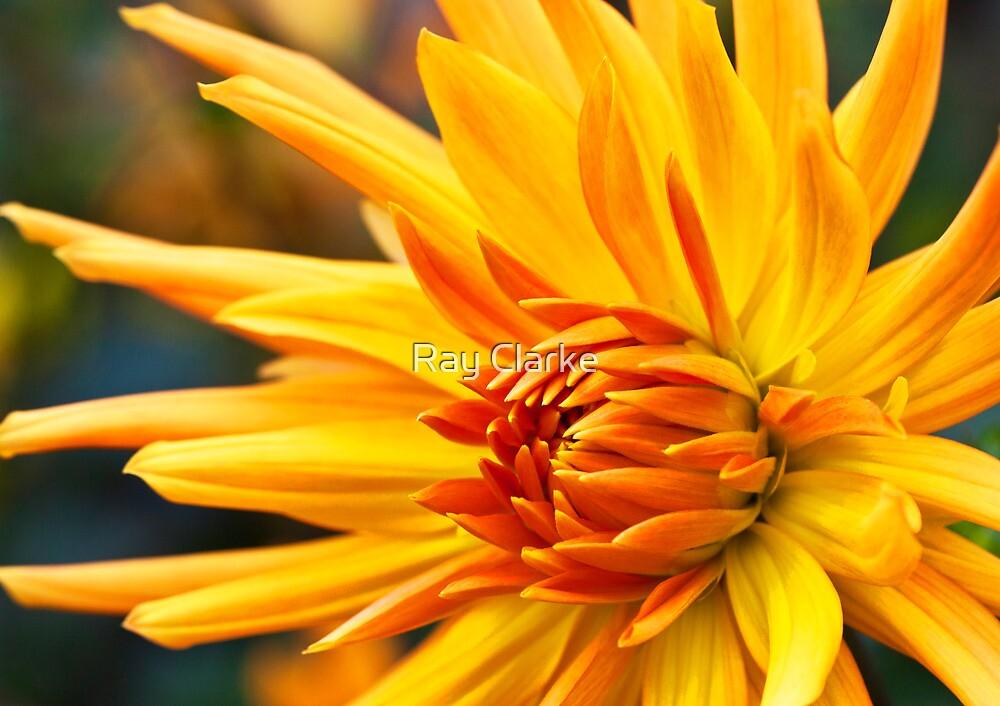 Golden Fingers by Ray Clarke