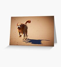 Shaggy Greeting Card