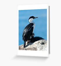 Antarctic Blue-eyed Shag [Phalacrocorax (atriceps) bransfieldensis] Greeting Card