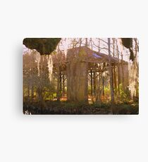 Swamp History Canvas Print