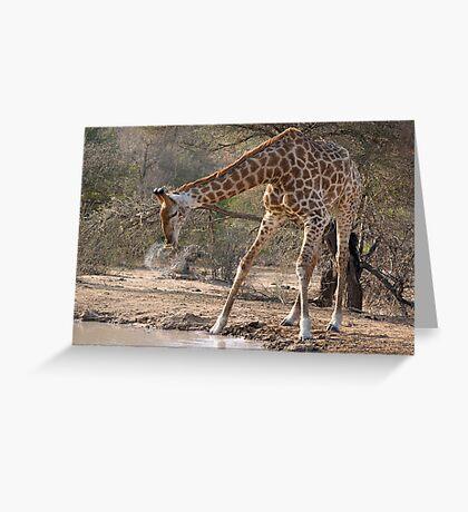 Giraffe Drinking Spray Greeting Card