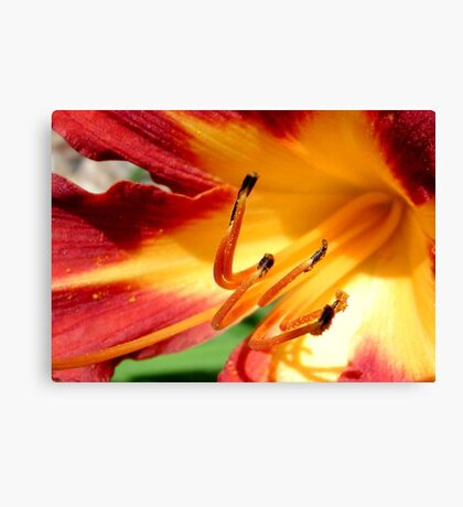 Coming soon to a neighborhood near you...SPRING FLOWERS!!! ©  Canvas Print