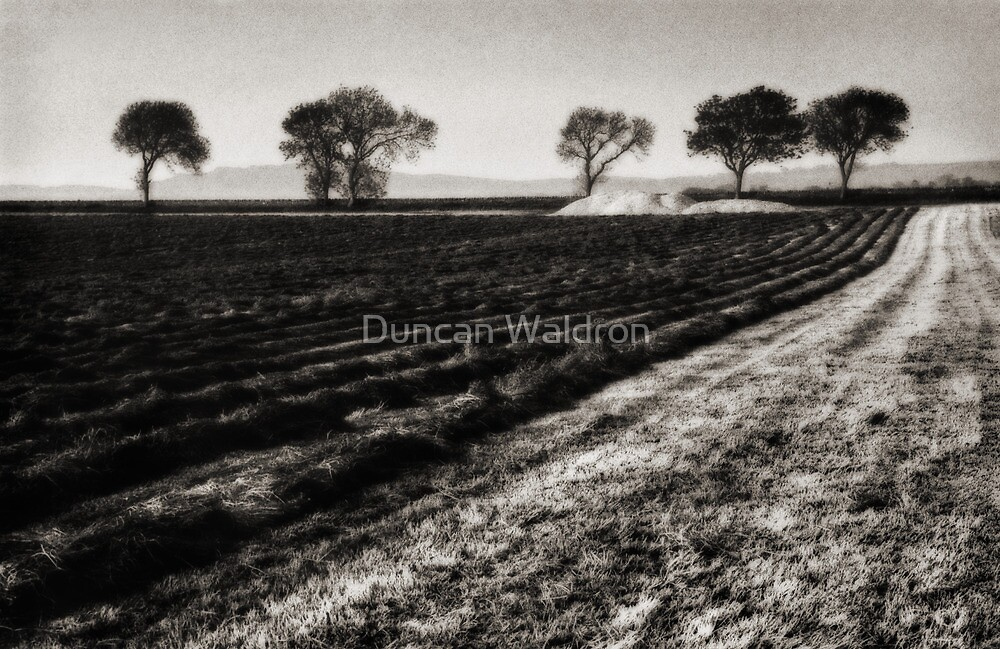 While the sun shines by Duncan Waldron