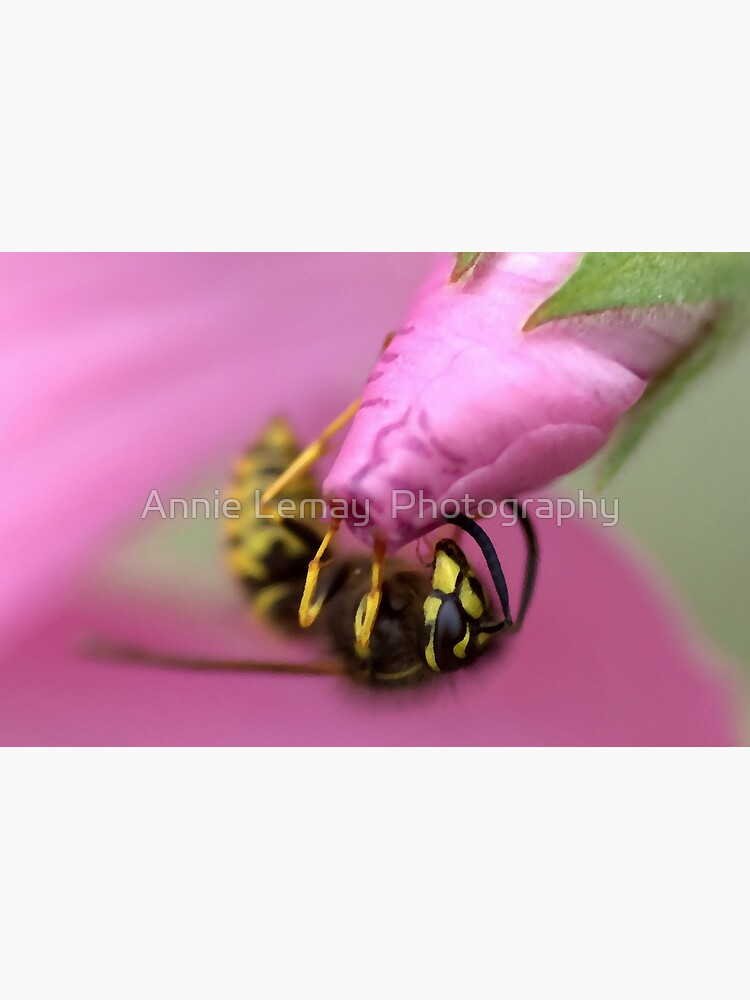 Stuck on You by ajlphotography