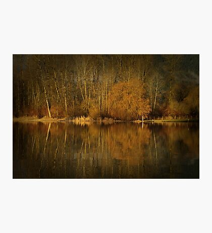 Golden Brown Photographic Print