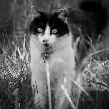 Molly in Black and White by daverach1