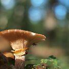mushroom and ladybird by weglet