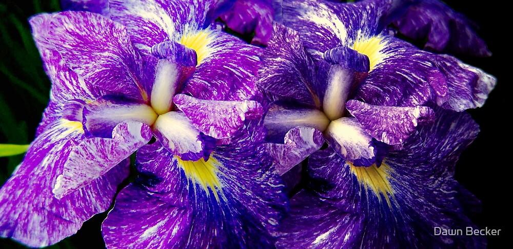 Purple Irises ©  by Dawn Becker