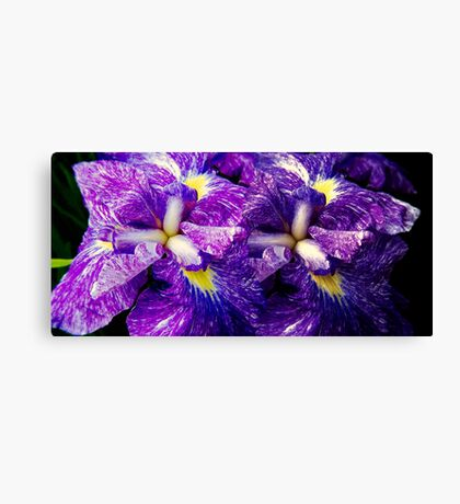 Purple Irises ©  Canvas Print