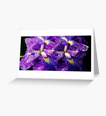 Purple Irises ©  Greeting Card