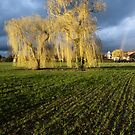 Weeping willow sunset by Yves Roumazeilles