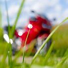 « Sur les routes de campagne en belle rouge @ Sol'So Photografée  » par Marianne Sol'So