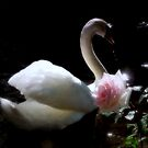 let swan be a harp and rose be a musician by Brian Bo Mei