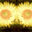 Sunshine!!! ©  by Dawn Becker