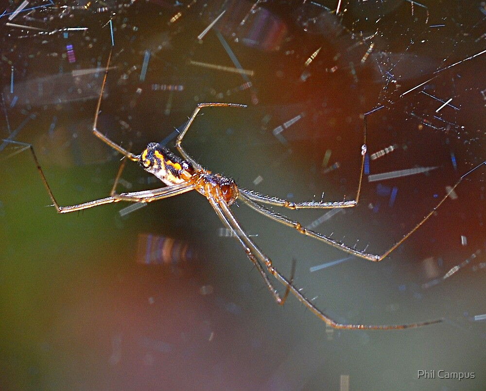 Spider by Phil Campus