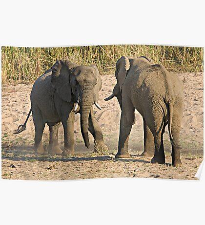 Elephant Disagreement Poster