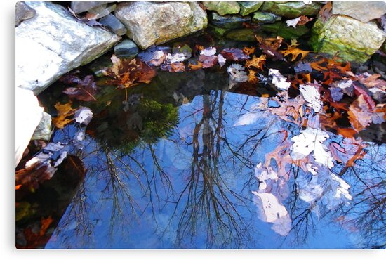 Mirror in the Pond by Kate Eller