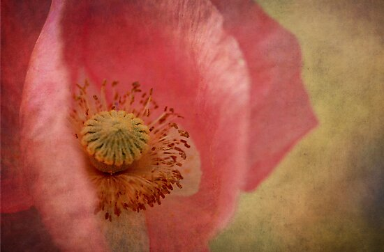 Poppy  by Annie Lemay  Photography