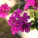 Floral Warmth by Danika & Scott Bennett-McLeish