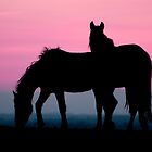 Horse silhouette by stuart powell