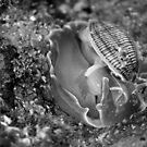 Strange Shellfish by reflector