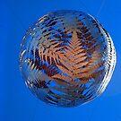 Silver Fern by John Dalkin
