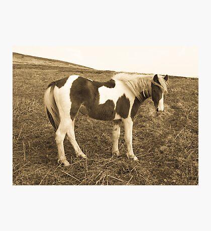 Wild West Pony Photographic Print