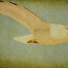 Seagull Texture by Deborah  Benoit